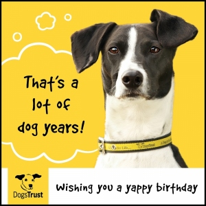 Birthday ecard Dogs Trust