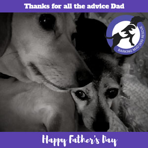 Fathers day card dog