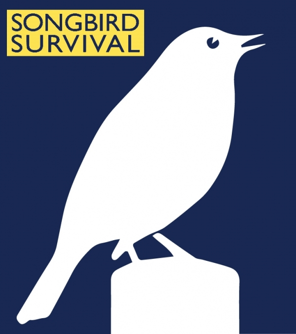 SongBird Survival eCards