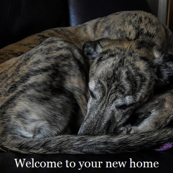Welcome to your new home eCards
