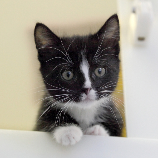 Give a rescue cat food and shelter for one day eCards