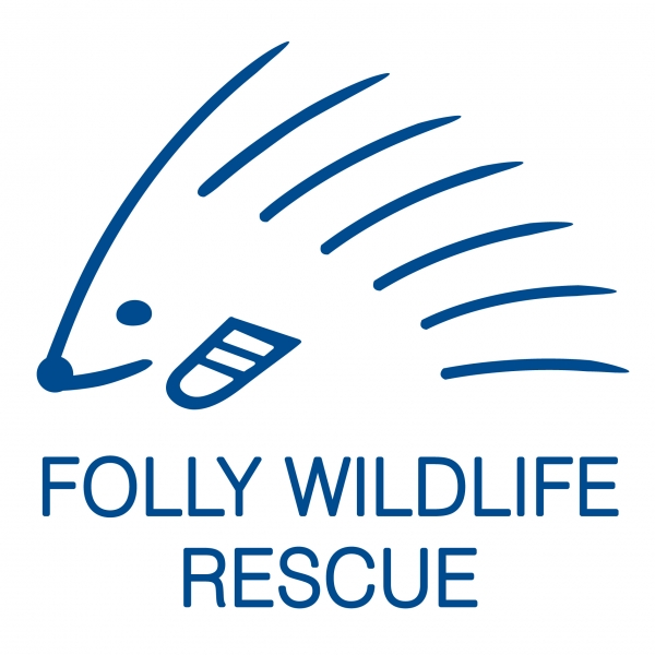 Folly Wildlife Rescue eCards