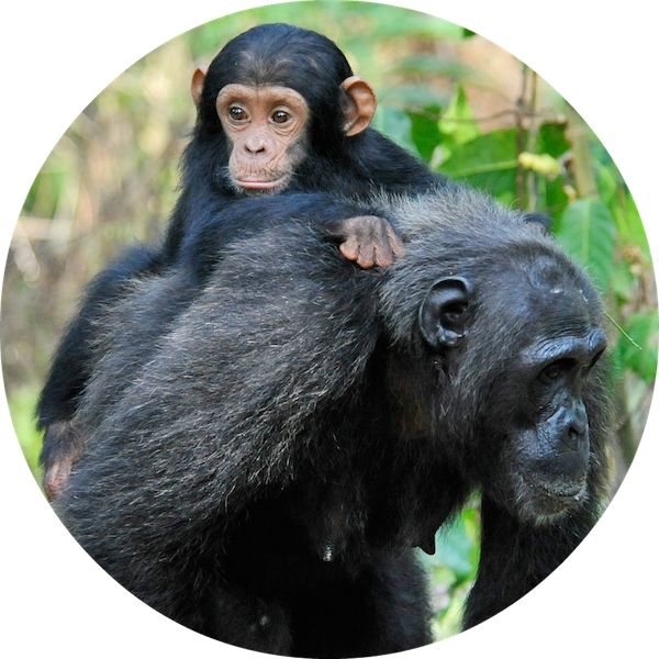 World Ape Fund eCards