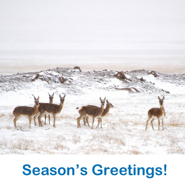 Send Tibet Relief Fund e-cards this festive season! eCards