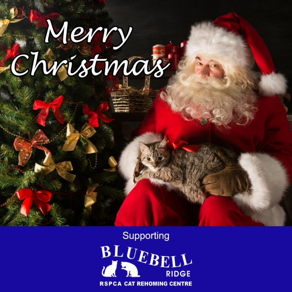 Send Corporate Christmas E-Cards eCards
