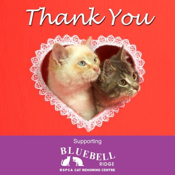 Send Thank You E-Cards eCards