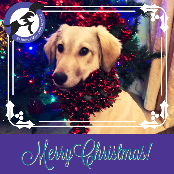 Send Christmas E-Cards to help shelter doggies without a fur family eCards