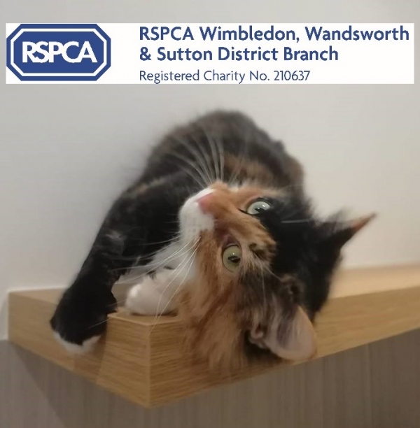 RSPCA Wimbledon, Wandsworth & Sutton eCards