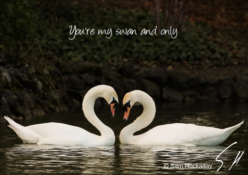 Show your love of wildlife this Valentine's Day eCards