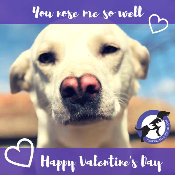 Love Dogs - Valentine's Day  eCards