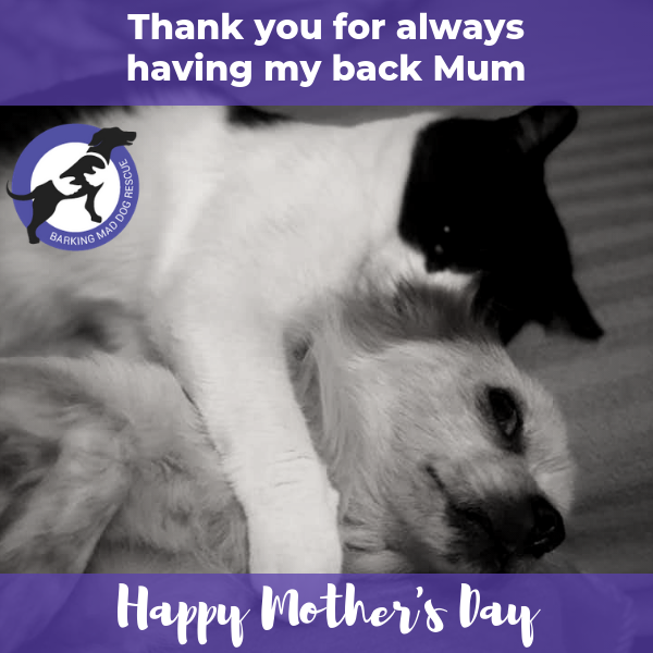 Save a dog's life for Mother's Day eCards