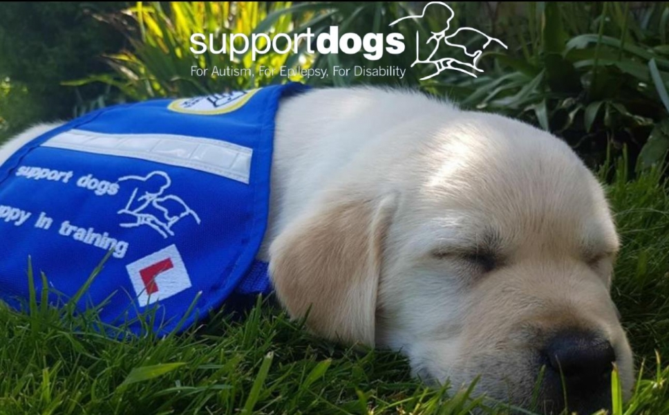 Support Dogs eCards