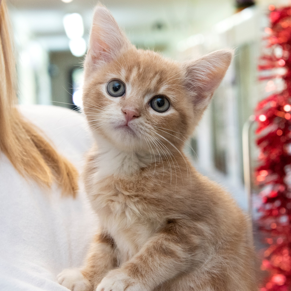 Give a Cat a Christmas Dinner eCards