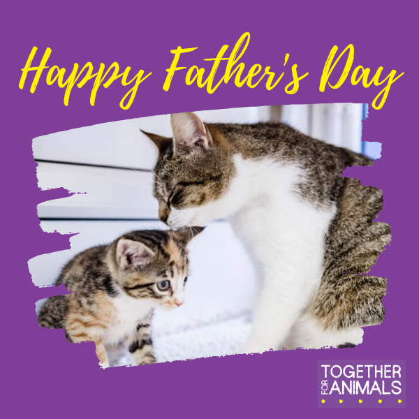 Our range of Father's Day e:cards are now online! Each card features an animal cared for by our members and who the funds we raise have helped. eCards