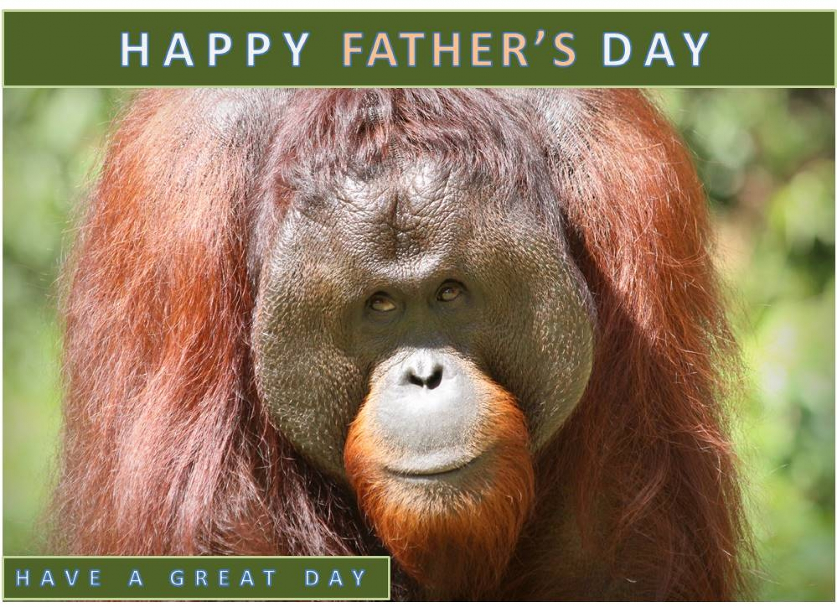 Send Dad a Father's Day card eCards