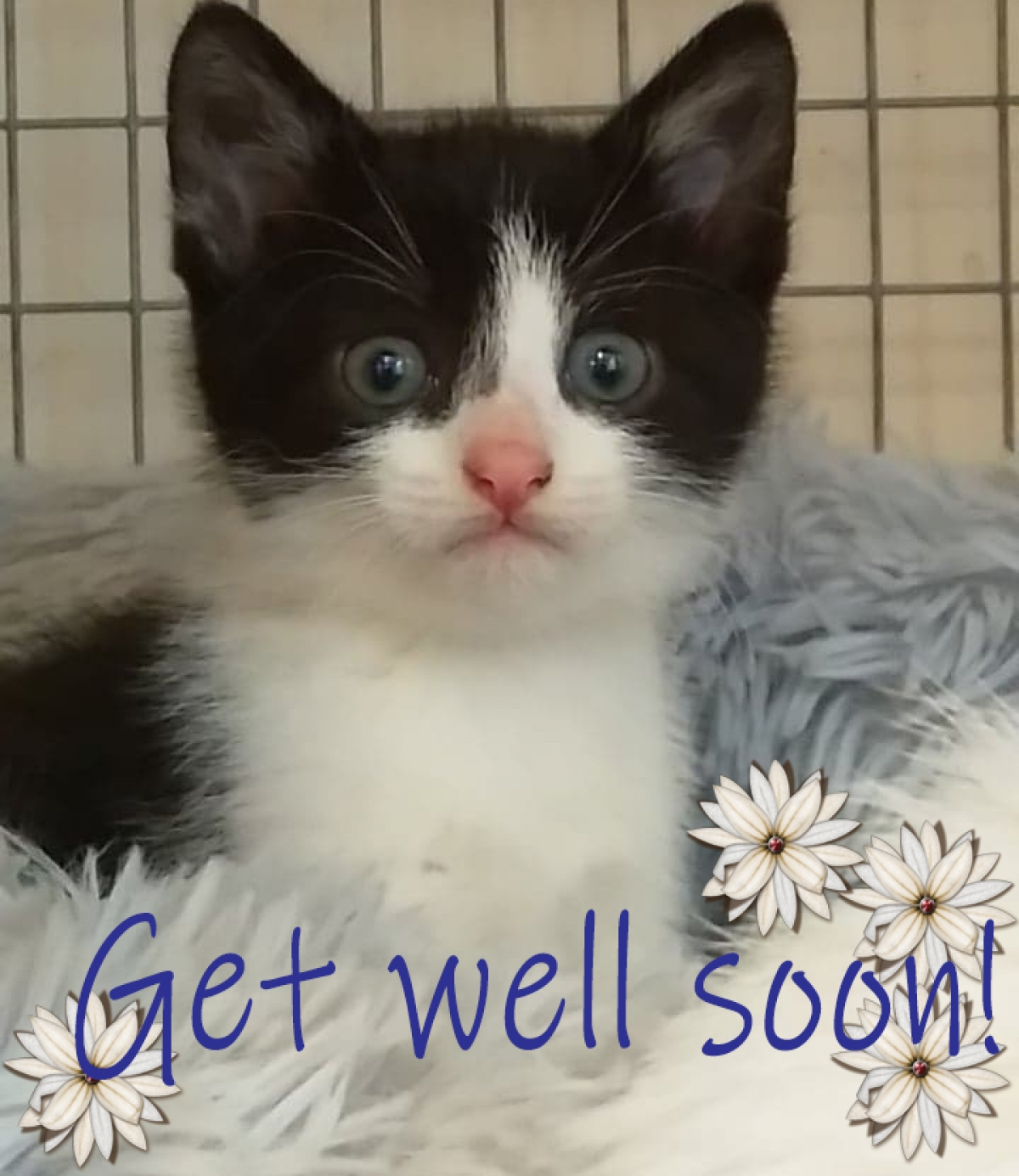 Send an e Get Well card from Coventry Cat Group eCards