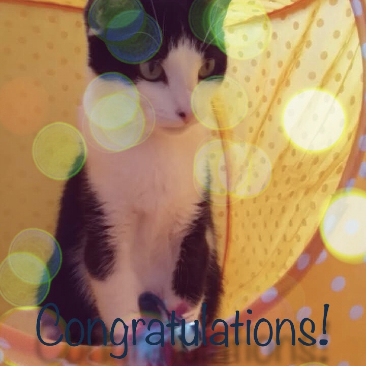 send e Congratulations Cards from Coventry Cat Group eCards