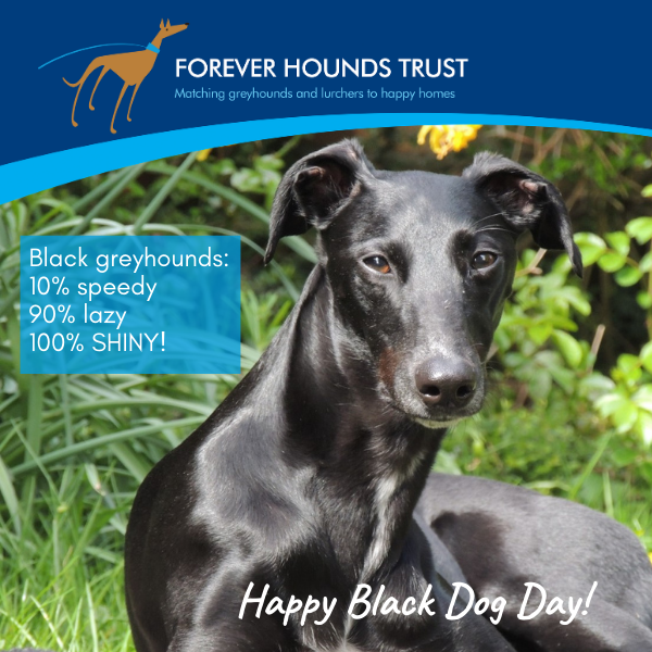 Celebrate all the black dogs out there! eCards