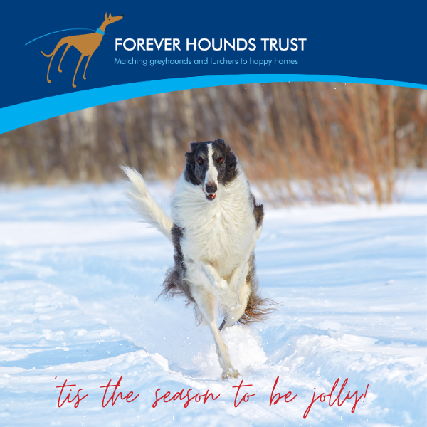 Spread some festive cheer with our houndie Christmas cards! eCards