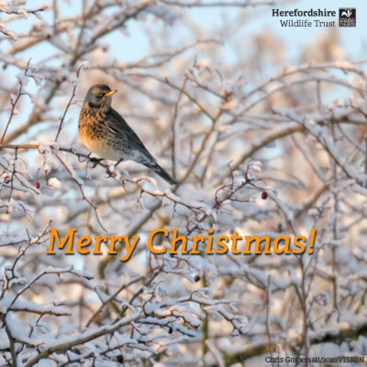 Send a WILD Christmas e-card eCards