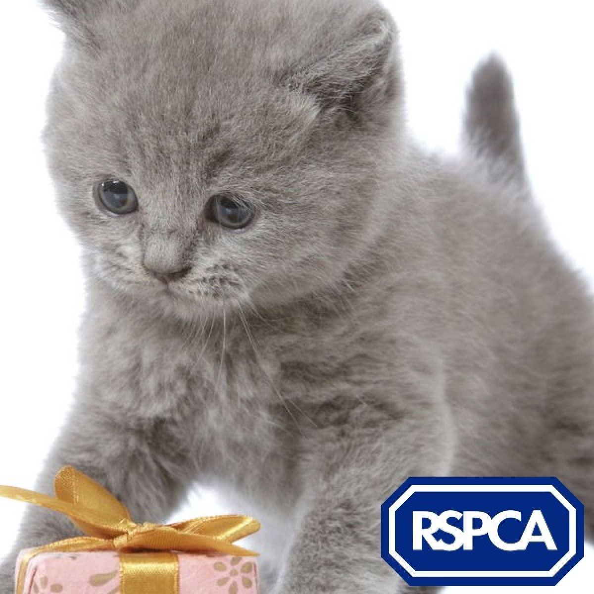 RSPCA Manchester & Salford eCards