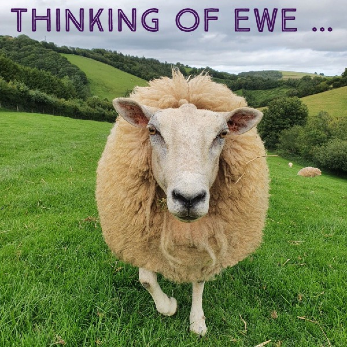Send a lovely sheep E-card to show someone special you are thinking of them eCards