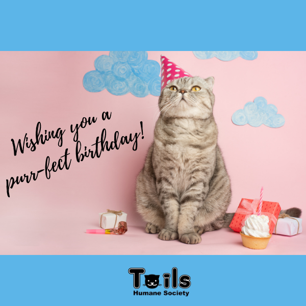 Support Shelter Pets with a Birthday E-Card eCards
